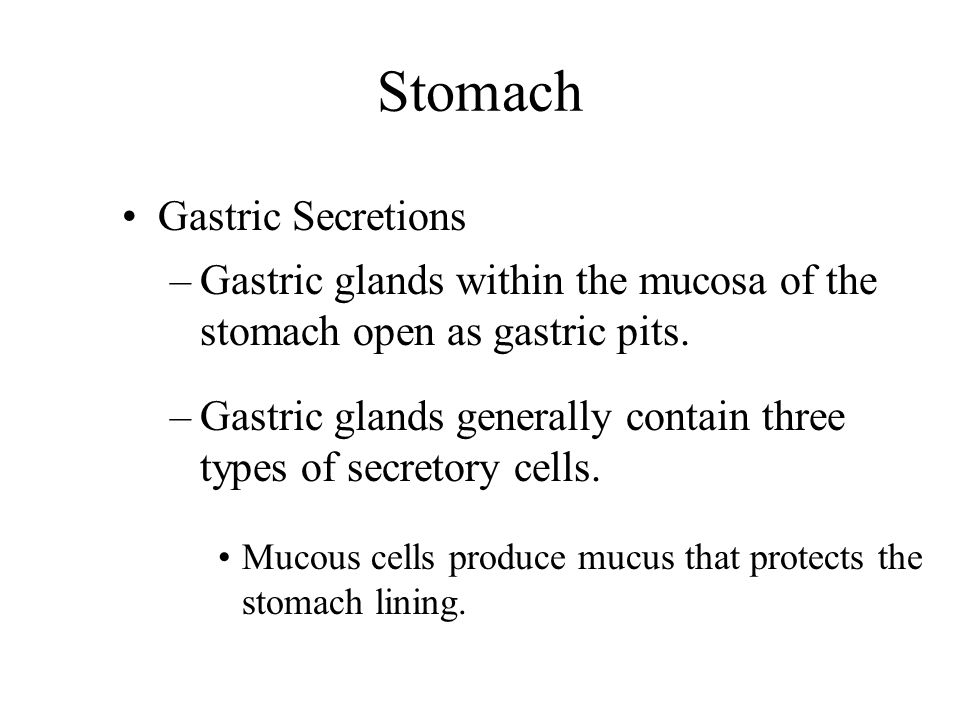 Stomach Gastric Secretions
