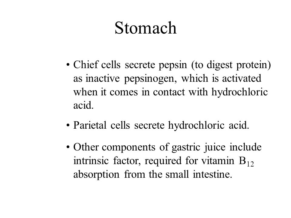 Stomach Chief cells secrete pepsin (to digest protein) as inactive pepsinogen, which is activated when it comes in contact with hydrochloric acid.
