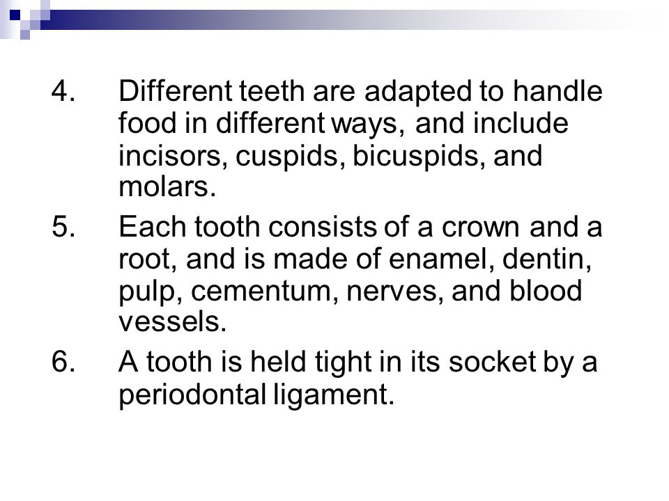 4. Different teeth are adapted to handle
