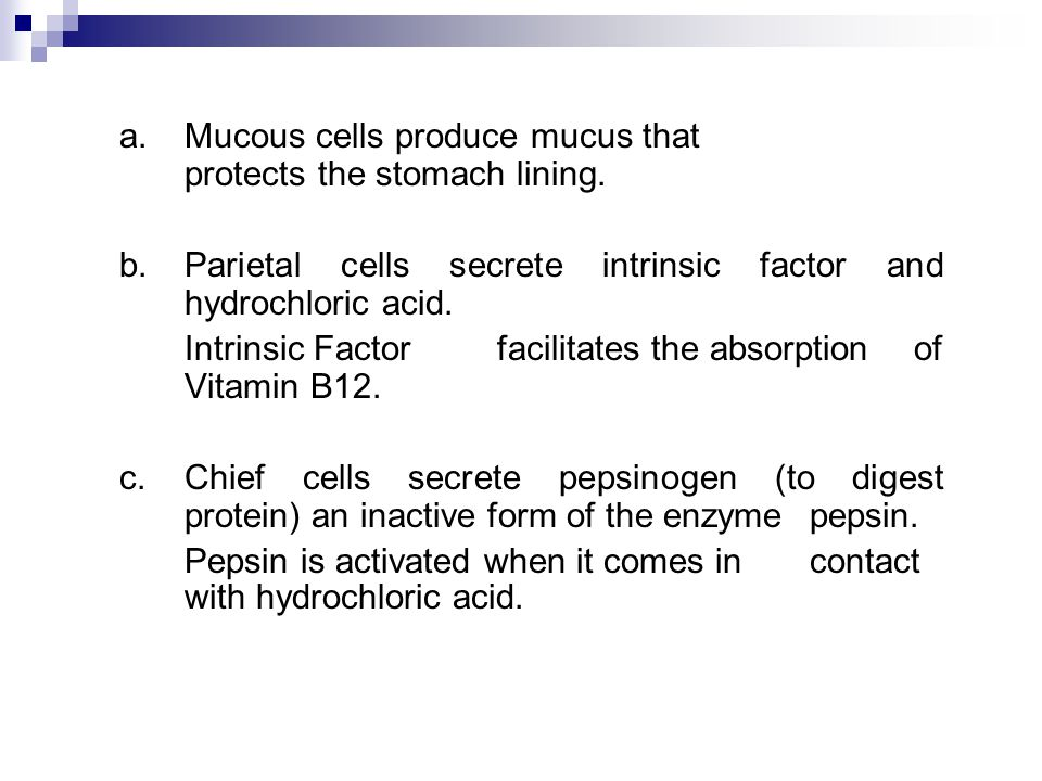a. Mucous cells produce mucus that protects the stomach lining.