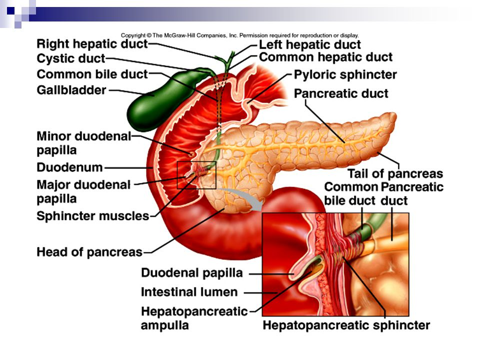  Pancreas A. The pancreas has an exocrine function of producing pancreatic juice that aids digestion.