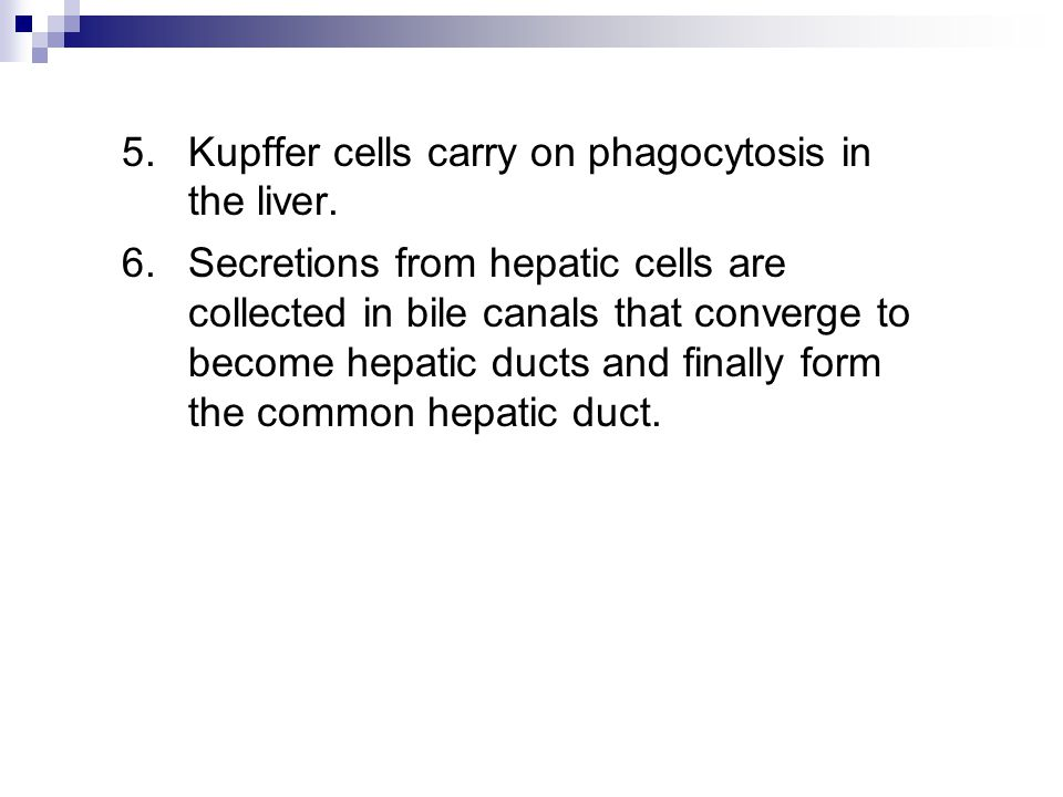5. Kupffer cells carry on phagocytosis in the liver.