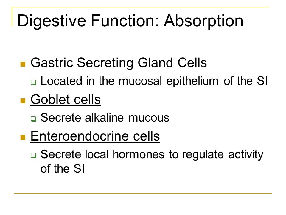 Digestive Function: Absorption