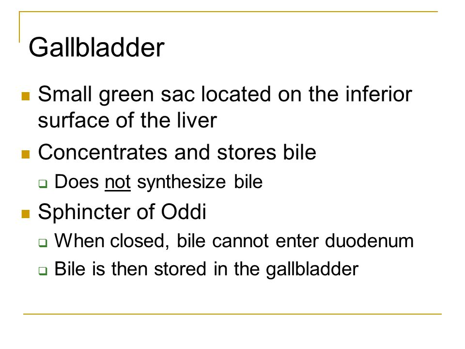 Gallbladder Small green sac located on the inferior surface of the liver. Concentrates and stores bile.