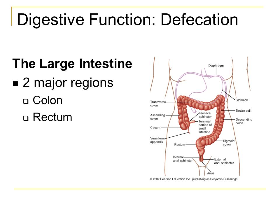 Digestive Function: Defecation