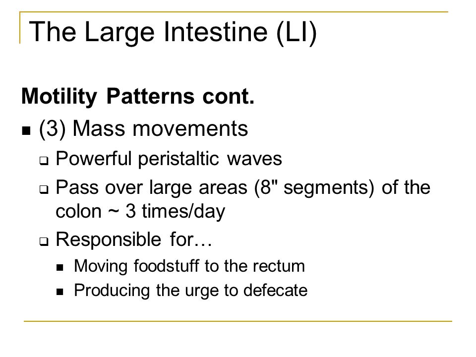 The Large Intestine (LI)