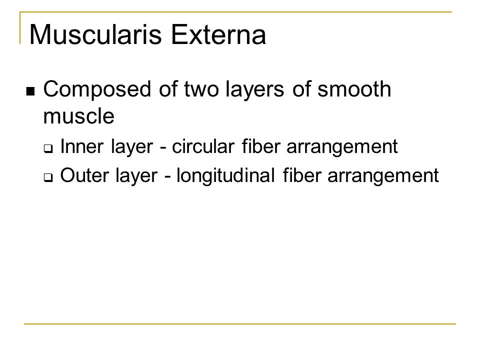 Muscularis Externa Composed of two layers of smooth muscle