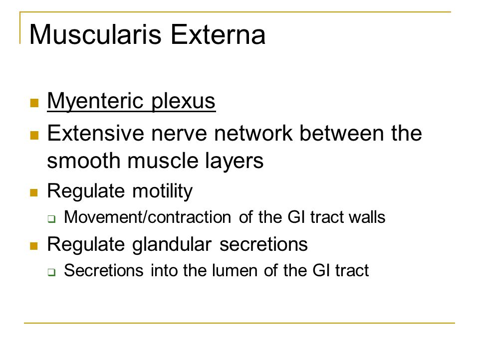Muscularis Externa Myenteric plexus