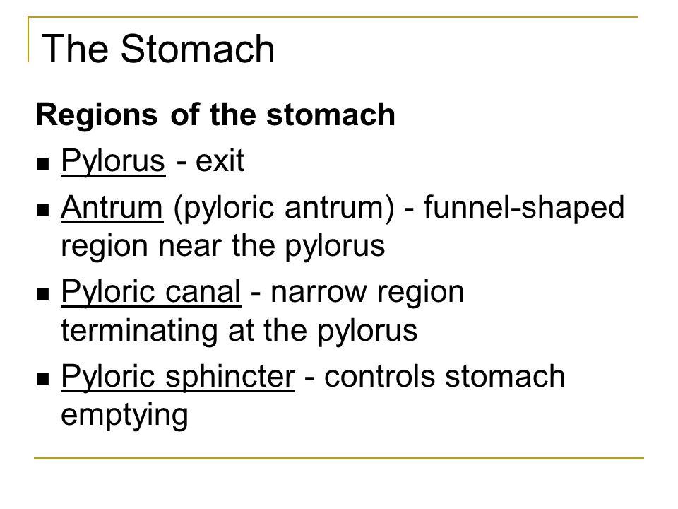 The Stomach Regions of the stomach Pylorus - exit