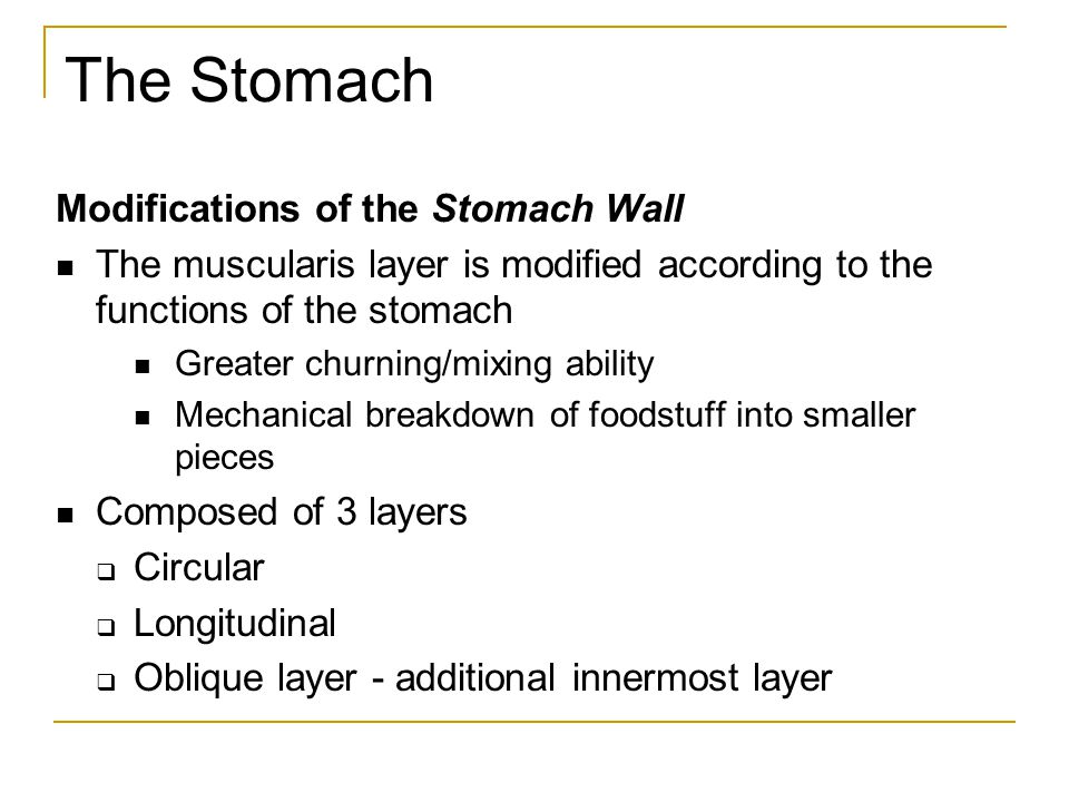 The Stomach Modifications of the Stomach Wall