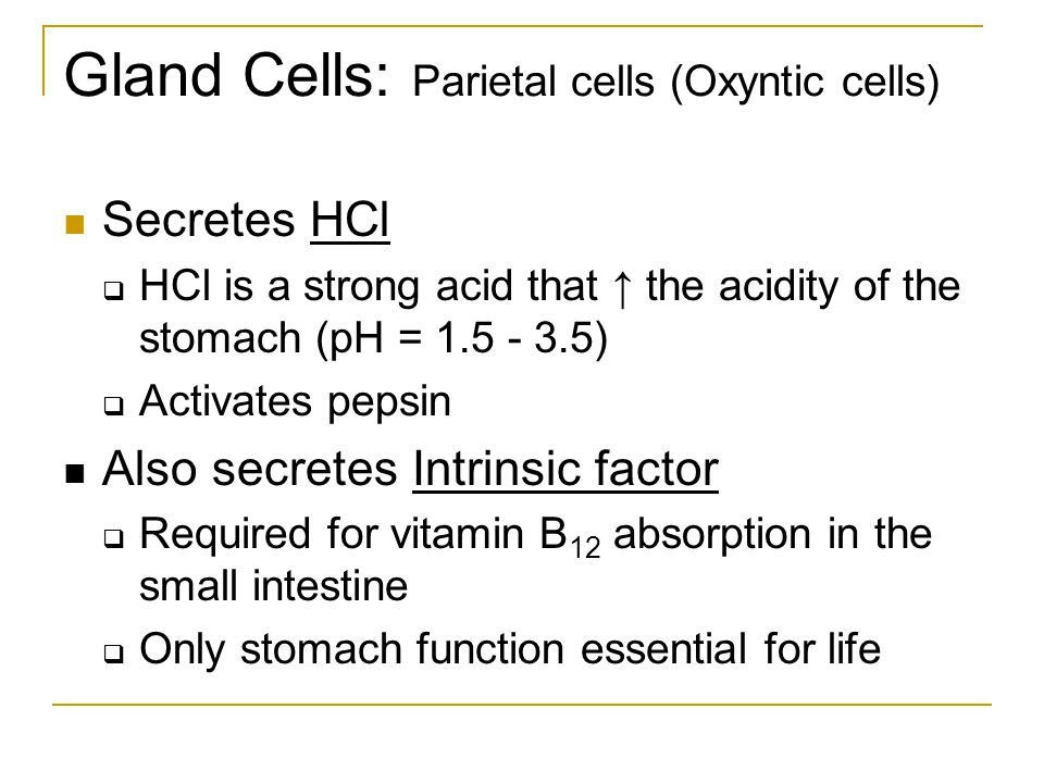 Gland Cells: Parietal cells (Oxyntic cells)