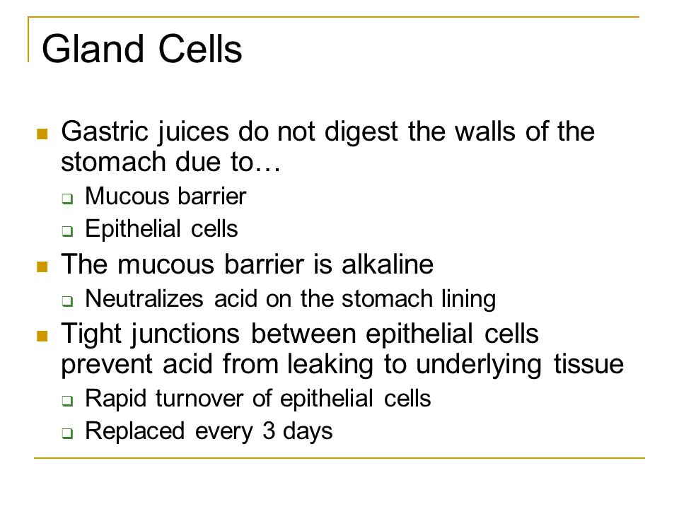 Gland Cells Gastric juices do not digest the walls of the stomach due to… Mucous barrier. Epithelial cells.