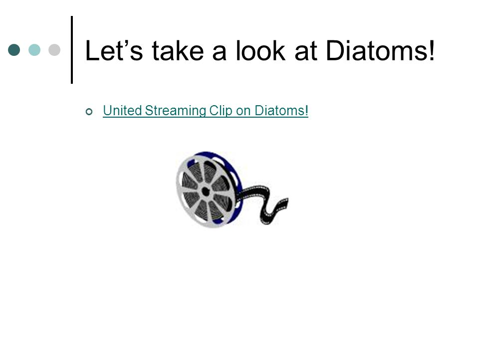 Let's take a look at Diatoms!