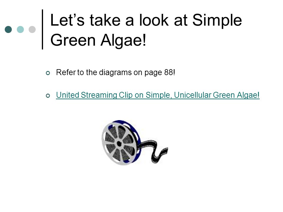 Let's take a look at Simple Green Algae!