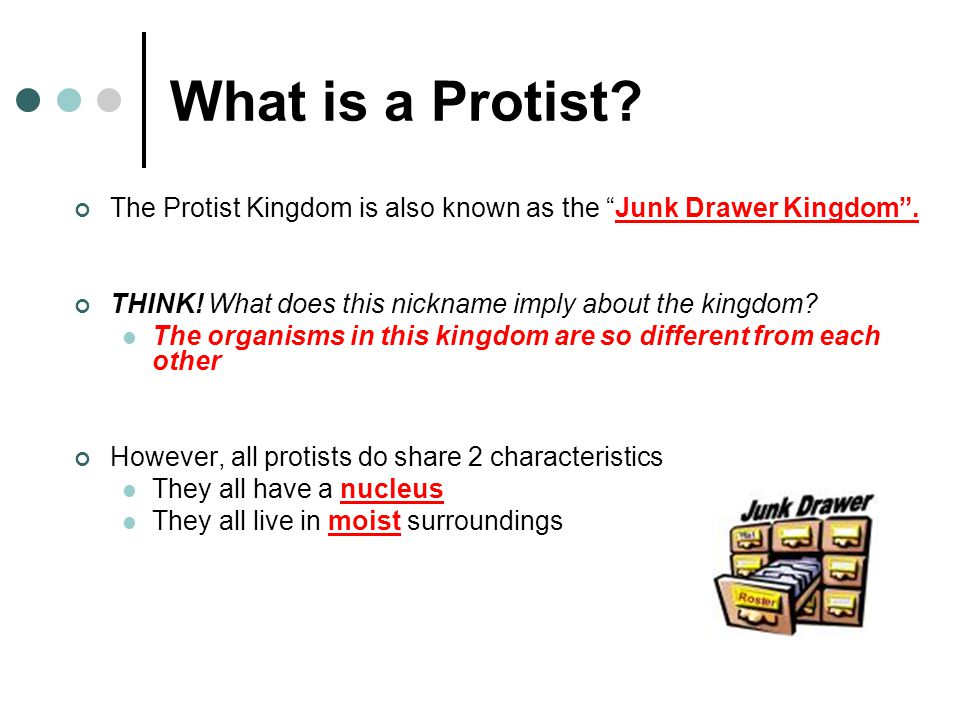 What is a Protist The Protist Kingdom is also known as the Junk Drawer Kingdom . THINK! What does this nickname imply about the kingdom