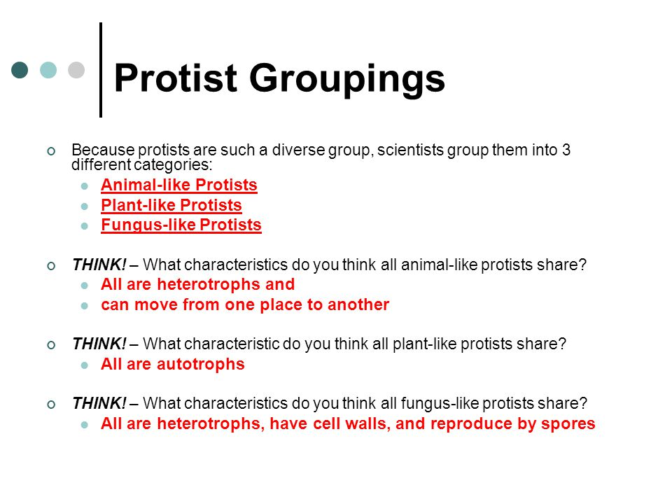 Protist Groupings Animal-like Protists Plant-like Protists