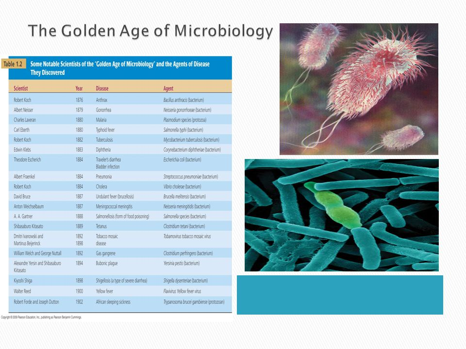 golden age of microbiology essays Your sample microbiology term paper from the time of the end of the 19th century known as the golden age of microbiology a our term paper examples and essays.