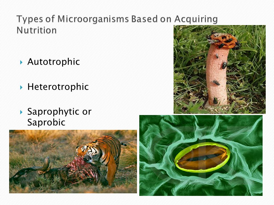 Types of Microorganisms Based on Acquiring Nutrition