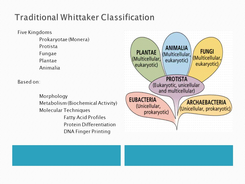 Traditional Whittaker Classification