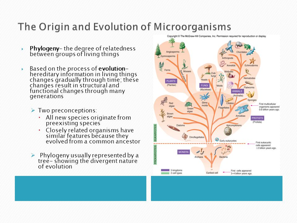 The Origin and Evolution of Microorganisms