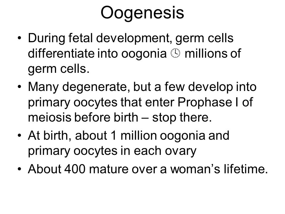 Oogenesis During fetal development, germ cells differentiate into oogonia  millions of germ cells.