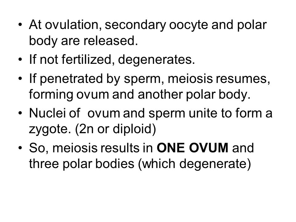 At ovulation, secondary oocyte and polar body are released.