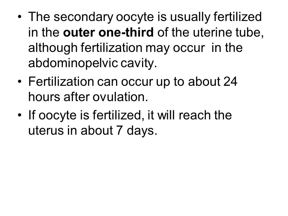The secondary oocyte is usually fertilized in the outer one-third of the uterine tube, although fertilization may occur in the abdominopelvic cavity.