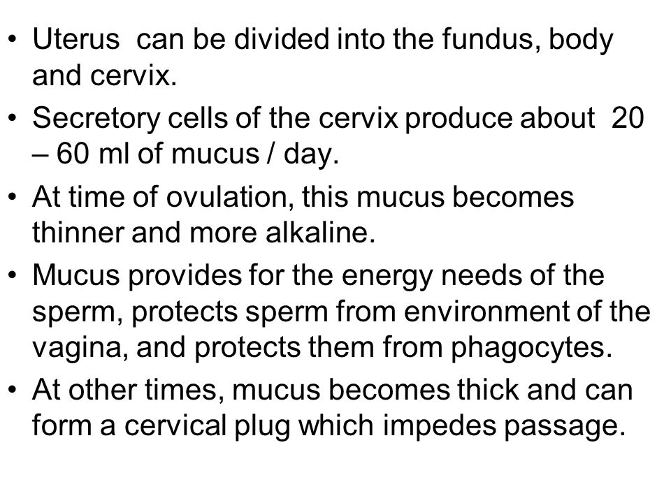 Uterus can be divided into the fundus, body and cervix.