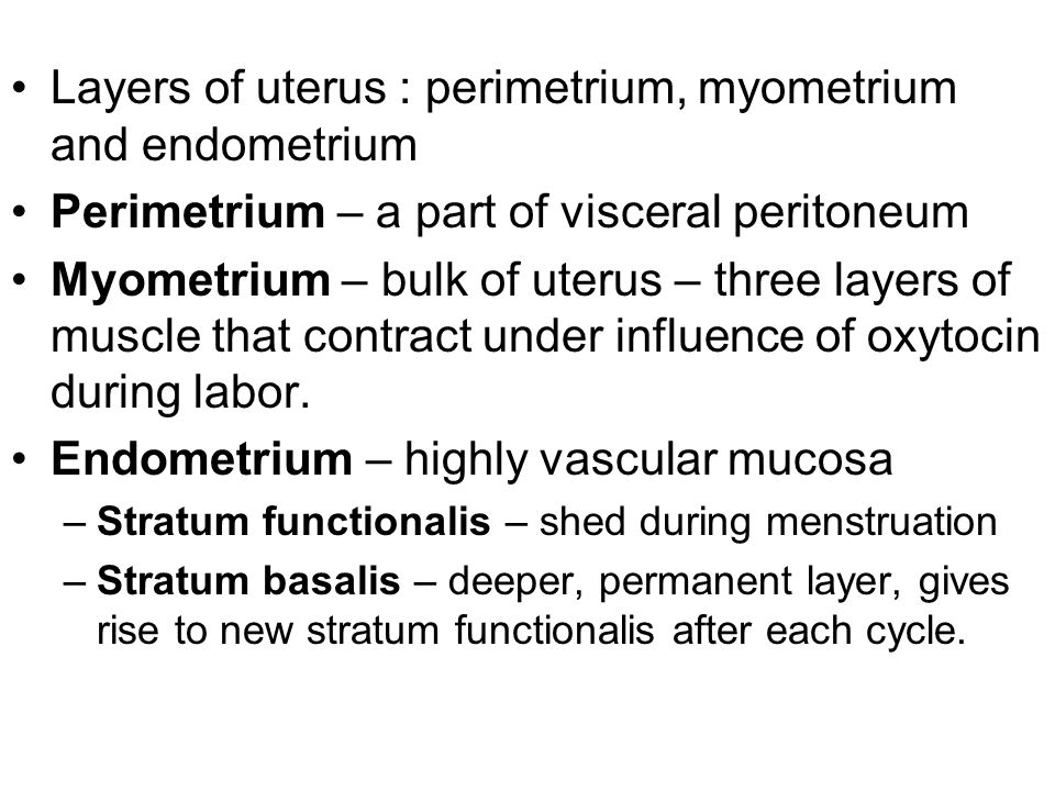 Layers of uterus : perimetrium, myometrium and endometrium