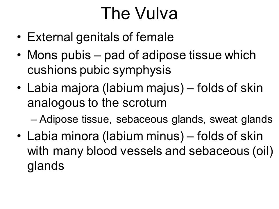 The Vulva External genitals of female