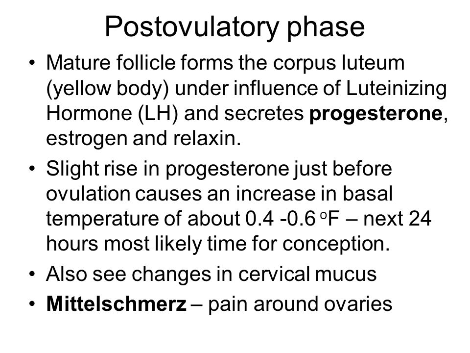 Postovulatory phase