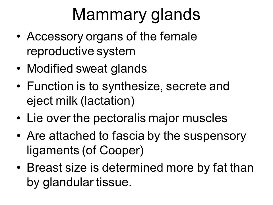 Mammary glands Accessory organs of the female reproductive system