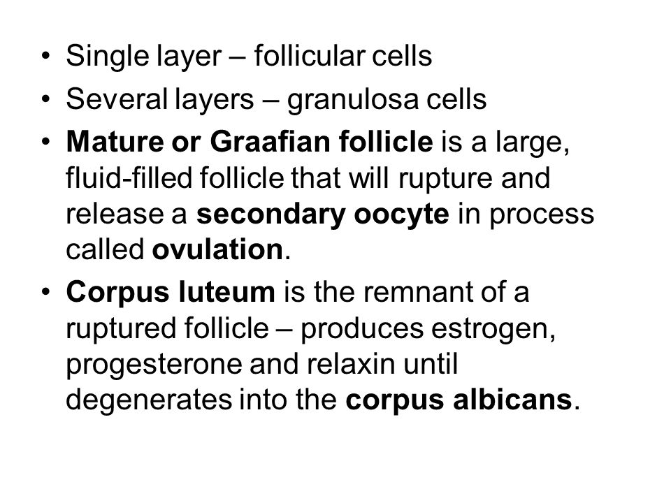 Single layer – follicular cells