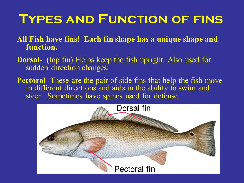 Types and Function of fins