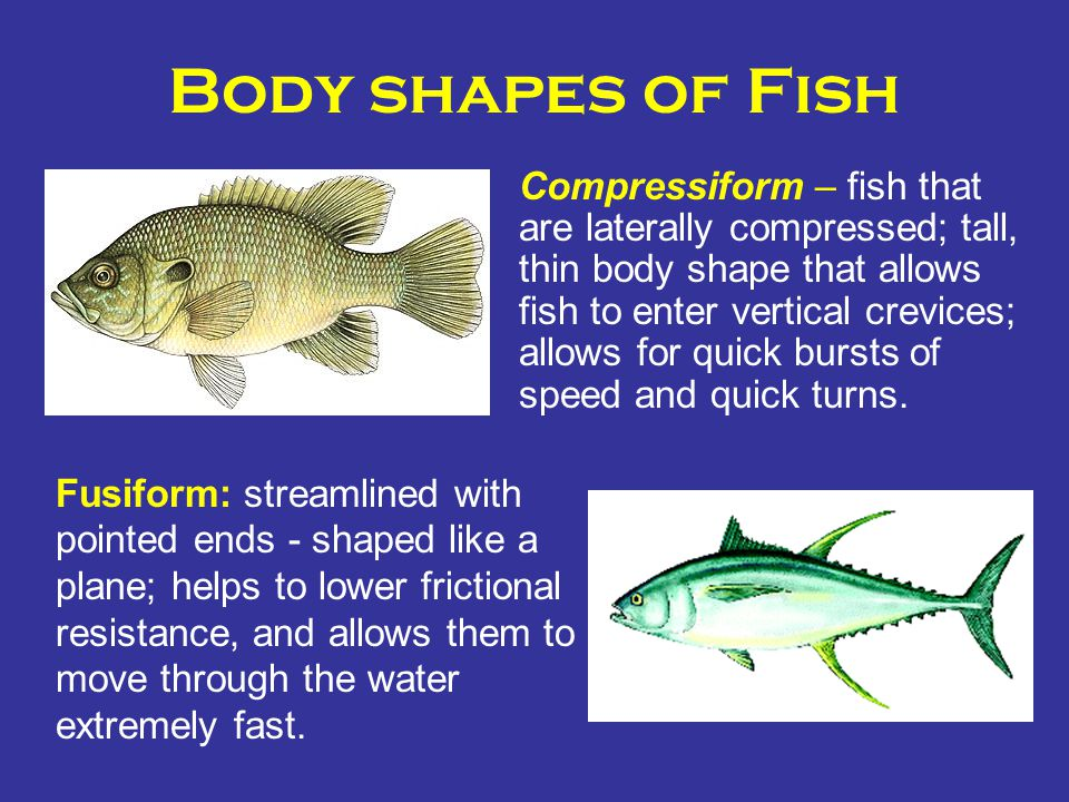 Body shapes of Fish