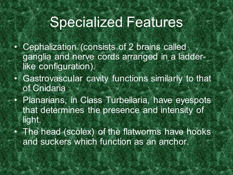 Specialized Features Cephalization (consists of 2 brains called ganglia and nerve cords arranged in a ladder-like configuration).