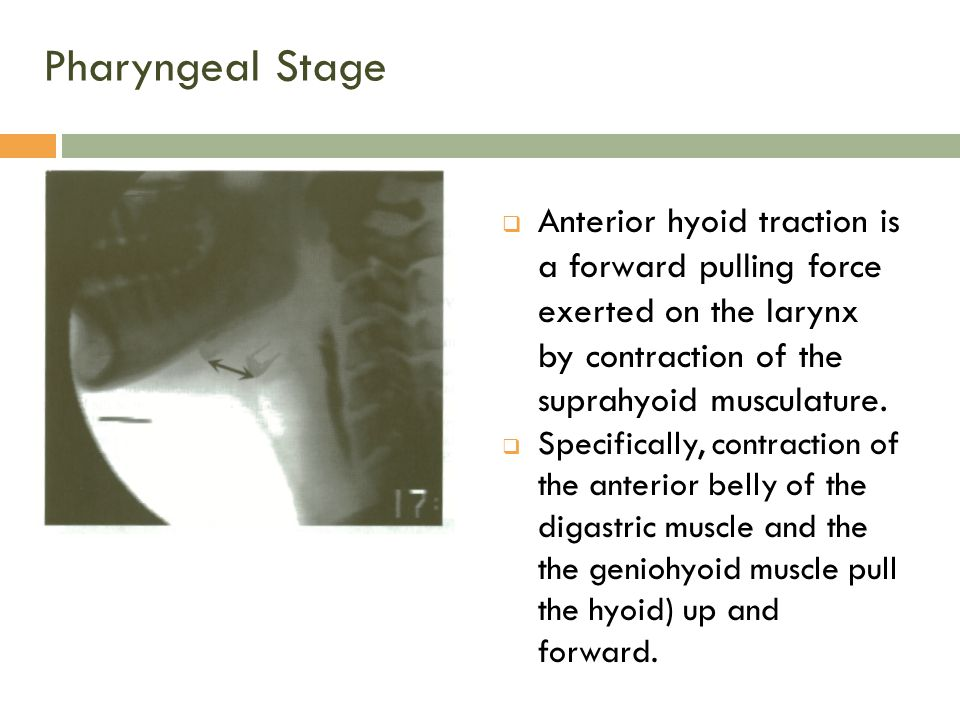 Pharyngeal Stage Anterior hyoid traction is a forward pulling force exerted on the larynx by contraction of the suprahyoid musculature.