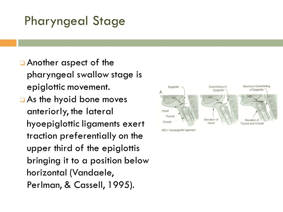 Pharyngeal Stage Another aspect of the pharyngeal swallow stage is epiglottic movement.