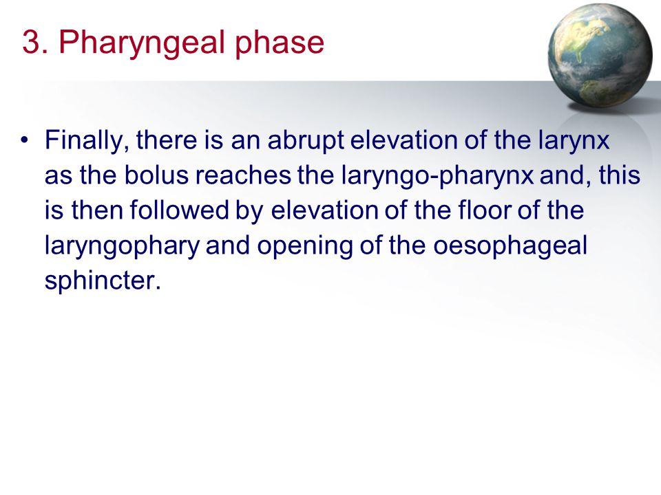 3. Pharyngeal phase