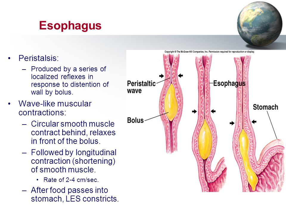 Esophagus Insert 18.4a Peristalsis: Wave-like muscular contractions: