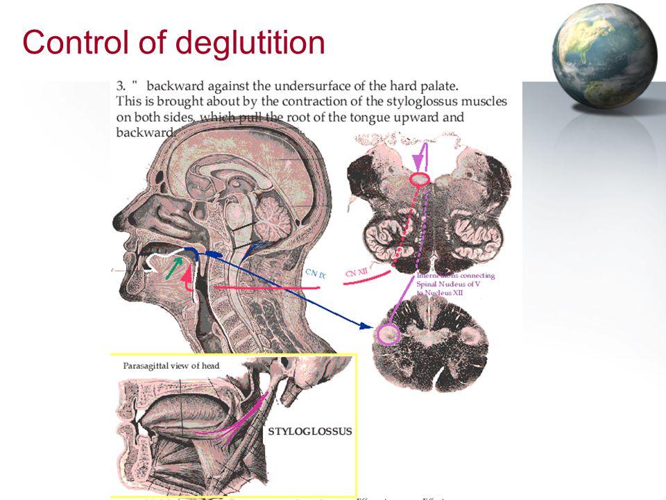 Control of deglutition