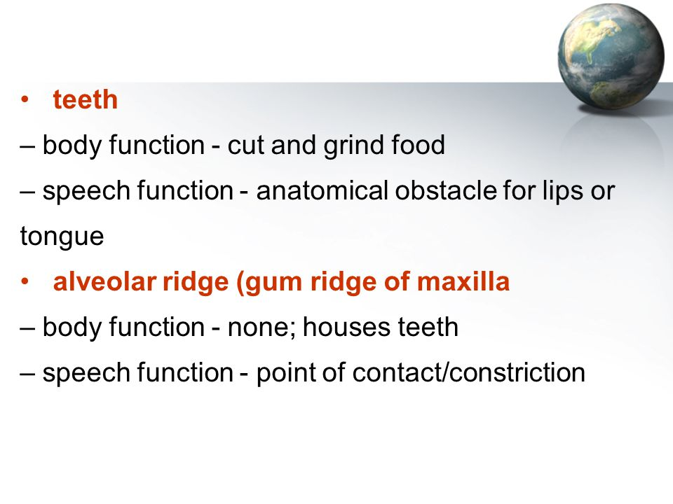 teeth – body function - cut and grind food. – speech function - anatomical obstacle for lips or. tongue.