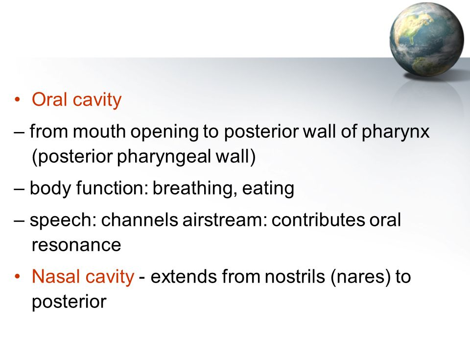 Oral cavity – from mouth opening to posterior wall of pharynx (posterior pharyngeal wall) – body function: breathing, eating.