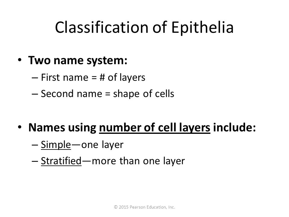 Classification of Epithelia