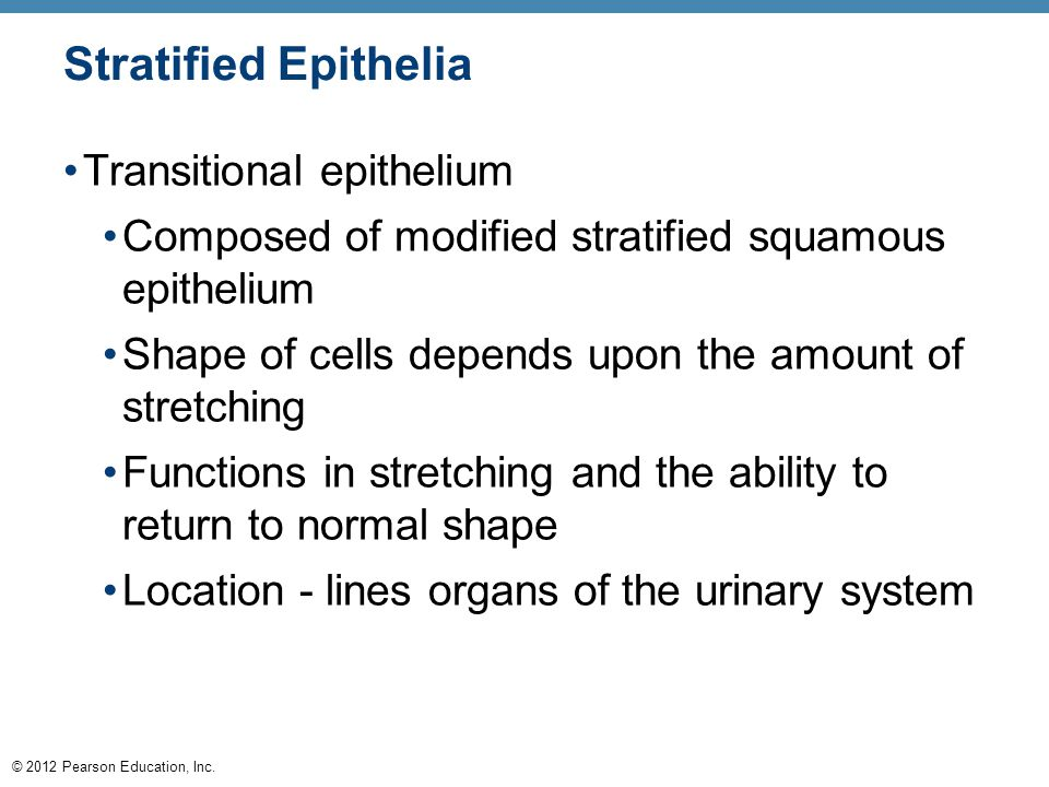 Stratified Epithelia Transitional epithelium
