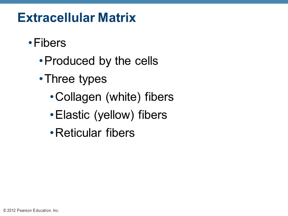 Extracellular Matrix Fibers Produced by the cells Three types