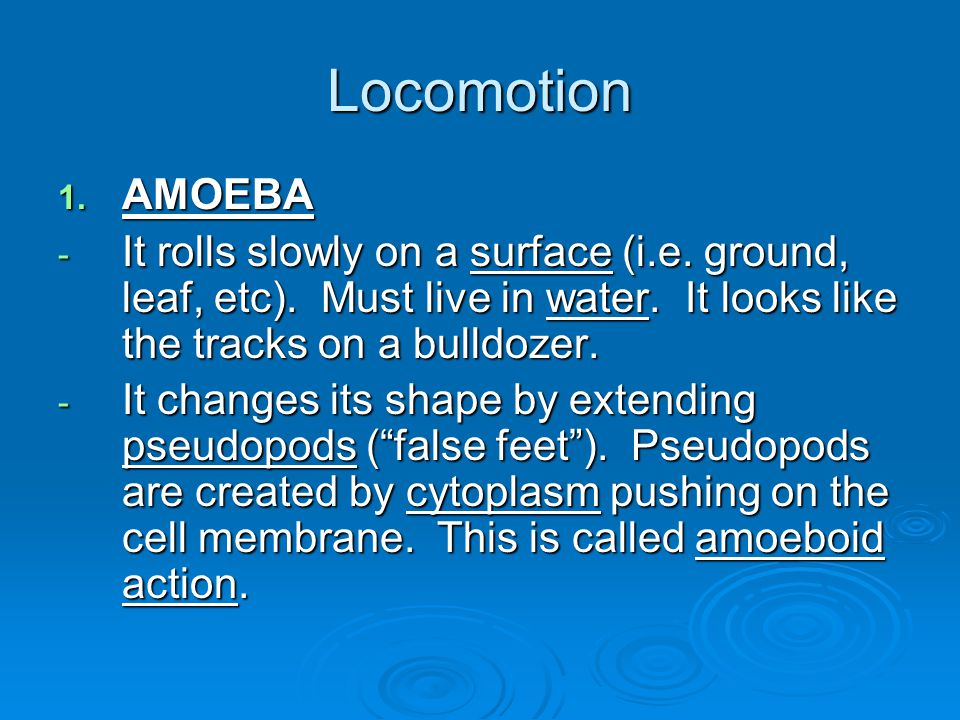 Locomotion AMOEBA. It rolls slowly on a surface (i.e. ground, leaf, etc). Must live in water. It looks like the tracks on a bulldozer.