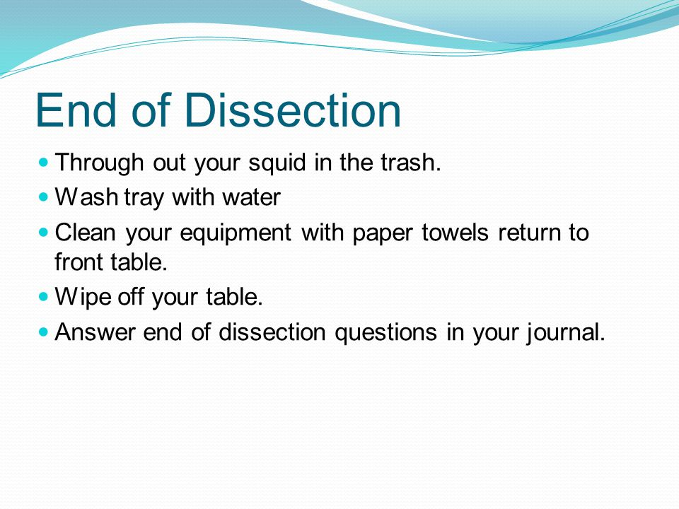End of Dissection Through out your squid in the trash.