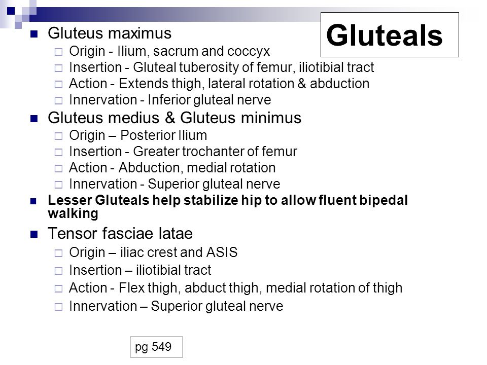 Gluteals Gluteus maximus Gluteus medius & Gluteus minimus