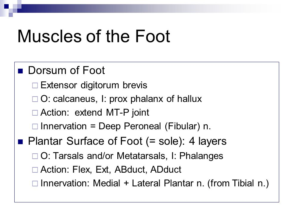 Muscles of the Foot Dorsum of Foot